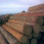 Сибирская лиственница в строительстве