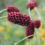 Продвижение дикорастущих съедобных растений