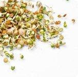 Пропаганда применения дикорастущих растений в пищу