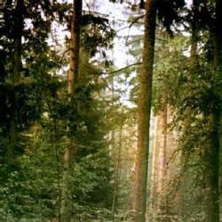 Полезные свойства древесины можжевельника