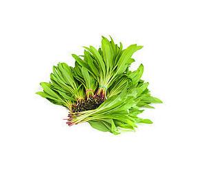 Черемша – растение с массой полезных свойств