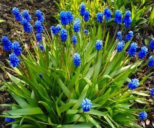cvety_sadov_sibiri